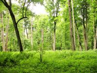Het bos te Belovezha. © STARLING reizen