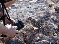 Espanola mockingbird. Even lachen naar het vogeltje! © Yves Adams
