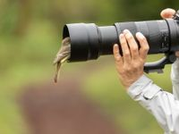 Sommige dieren komen wel héél dichtbij ... © Yves Adams