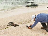 Een portretfoto maken van een zeeleguaan doe je zo! © Yves Adams