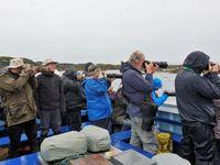 Les excursions en bateau permettent d'approcher la faune au plus près sans occasionner de dérangement