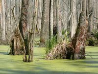 Nous avons la chance de parcourir les sentiers de la forêt primaire de Bialowieza
