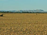 Vue sur l'immense steppe de Crau