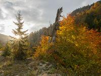 Borjomi National Park. © Johannes Jansen