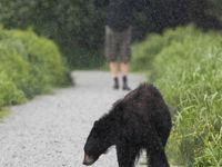 Zelfs in hartje Vancouver is er altijd wel wat wildlife te vinden. © Joachim Bertrands
