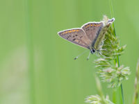 De streek kent tal van leuke vlindersoorten. © Billy Herman