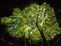 Een grot in het bos doet dienst als uitstekend fotografiemateriaal, en we verkennen natuurlijk ook de wanden voor vleermuizen. © Billy Herman