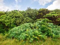 De flora is uniek en ontwikkelde zich onder invloed van het bijzonder zachte klimaat. © Billy Herman