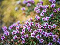 Sfeerbeeldje van de lokale flora. © David 'Billy' Herman