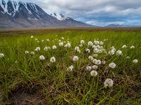 Prachtige, arctische moerassen kenmerken de korte zomer. © David 'Billy' Herman