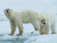 Samen aan de rand van het ijs. © David 'Billy' Herman
