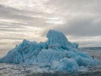 Het loont steeds om deze ijsbergen te checken op ivoormeeuwen of ander leuks. © David 'Billy' Herman
