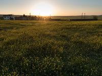 Een sfeerbeeld tijdens de ondergaande zon. © Brecht De Meulenaer