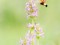 Aan bloeiende flora geen gebrek! © Hans Debruyne