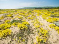 Droge zandvlakten met een zeldzame flora. © Billy Herman