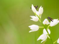 Dit wit bosvogeltje is een van de orchideeën die thuishoren in dichte loofbossen. © Billy Herman