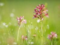Tal van orchideeën komen we tegen op deze reis. © Billy Herman