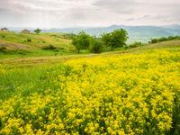 Bloemrijke graslanden... © Billy Herman