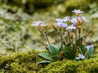 We hebben natuurlijk ook oog voor de lokale flora! © Billy Herman