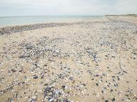 Mosselschelpen op het strand van de Zwarte Zee. © Billy Herman
