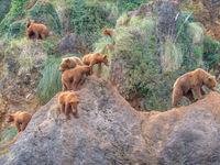 Een familie bruine beren. © Jeffrey Van Daele