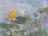 Herfstkleuren in het moeras. © Bart Heirweg