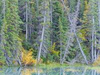 Een moeras vol herfstkleuren. © Bart Heirweg