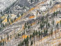 Een besneeuwde bergflank tijdens de vroege herfst. © Bart Heirweg