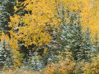 Herfstbladeren en -kleuren. © Bart Heirweg