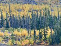 Een bergflank in prachtige herfstkleuren. © Bart Heirweg