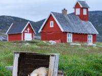 Een husky rust uit tijdens een voor Groenlandse normen warme namiddag. © Bart Heirweg