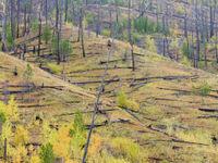 Stille getuigen van een eerdere bosbrand. © Bart Heirweg