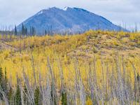 Herfstkleuren in de Rockies. © Bart Heirweg