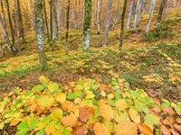 Een bos dat langzamerhand in herfstkleuren gehuld gaat. © Bart Heirweg