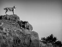 De Eurasian Lynx. © Jeffrey Van Daele