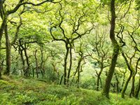 De bomen langs de Watersmeet trail hebben een unieke vorm en zijn daardoor erg fotogeniek. © Sandy Spaenhoven