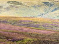 De zomermaanden staan garant voor prachtige landschappen, met een bloeiende heide als middelpunt. © Sandy Spaenhoven