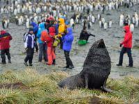 Deze zeebeer bewaakt de kolonie. © Oceanwide Expeditions / STARLING reizen