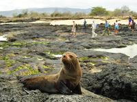 De vulkanische ondergrond is de ideale zonnebank en verwarming! © Yves Adams