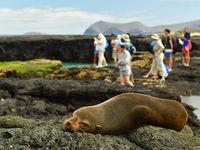 Hoewel ze normaal gezien ver op zee vertoeven, is even uitrusten in het warme weer tevens aan de orde!© Yves Adams