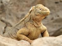 Echte dinosaurussen! © Yves Adams