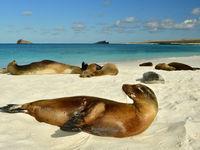 Het landschap is erg divers op de Galapagos, met naast rotsen ook parelwitte stranden. © Yves Adams