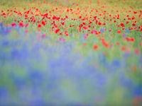 Waar vind je dit soort bloemrijke weiden nog? © Billy Herman