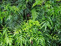 De vegetatie aan de kust is subtropisch en bijzonder gelijkend aan regenwouden meer naar het zuiden. © Billy Herman