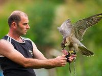 Een lokale valkenier met een van zijn vogels. © Billy Herman