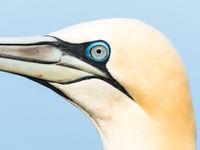 Close-up jan-van-gent. © Jeffrey Van Daele