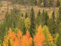 Finse herfstkleuren. © Martine Decoussemaeker en Jacky Launoy