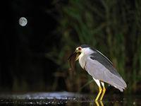 Délicieux repas à la lueur de la lune © Marc Costermans