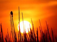 Coucher de soleil © Marc Costermans