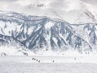 Een groep Stellers zeearenden in Hokkaido. © Jeffrey Van Daele